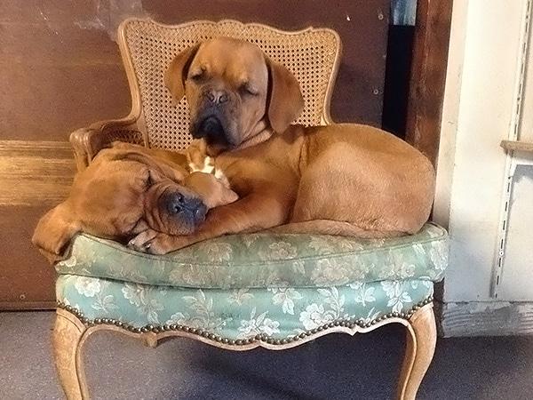Pension Canine La Pauberthilaine